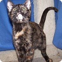 Adopt A Pet :: K-Kenna1-Kimi - Colorado Springs, CO