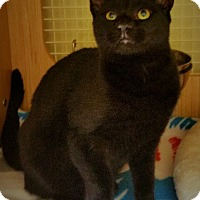 Adopt A Pet :: Clyde - East Meadow, NY