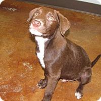 Adopt A Pet :: Dodge - Groton, MA