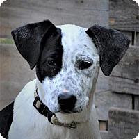 Adopt A Pet :: Becky - Chambersburg, PA