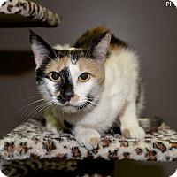 Adopt A Pet :: Karen - Medina, OH