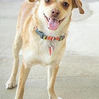 Adopt A Pet :: Spirit - Van Nuys, CA