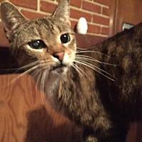 Adopt A Pet :: Tina - Columbia, SC