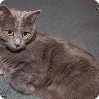 Adopt A Pet :: Zane - Cincinnati, OH