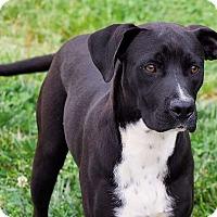 Adopt A Pet :: Alex - Lincolnton, NC