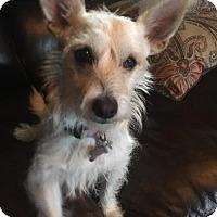 Adopt A Pet :: Button - San Antonio, TX