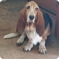 Adopt A Pet :: Hanna--in New England! - Chichester, NH