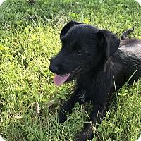 Adopt A Pet :: Barry - Tumwater, WA