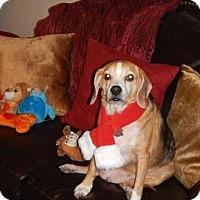 Adopt A Pet :: Happy Hunter - Phoenix, AZ