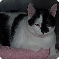 Adopt A Pet :: carol #2 - El Cajon, CA
