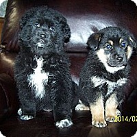 Adopt A Pet :: Lacy & Barbie - Denver, IN