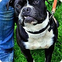 Adopt A Pet :: Chong - Chattanooga, TN