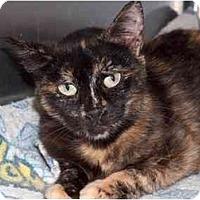 Adopt A Pet :: Hope - Quincy, MA