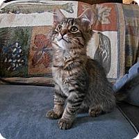 Adopt A Pet :: Louise - Richland, MI