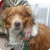 Adopt A Pet :: Gregory - Greencastle, NC