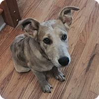 Adopt A Pet :: FIfe - Homewood, AL