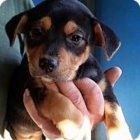 Adopt A Pet :: Sara Belle - Gainesville, FL