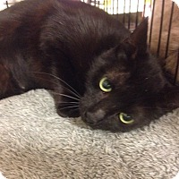 Adopt A Pet :: Oprah - College Station, TX