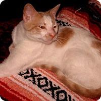 Adopt A Pet :: Julian - Colmar, PA
