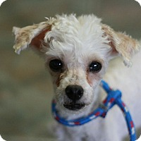Adopt A Pet :: Juicy - Canoga Park, CA