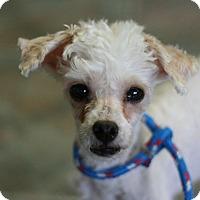 Adopt A Pet :: Juicy - Canoga Park, CA