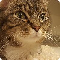 Adopt A Pet :: Cleo Rio - Grayslake, IL