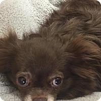 Adopt A Pet :: Dean - Fall River, MA