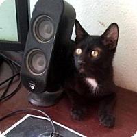 Adopt A Pet :: Rinzler - Chandler, AZ