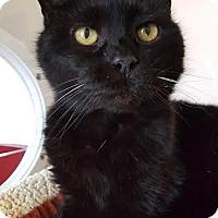 Adopt A Pet :: Gramma Tala - Salisbury, MA