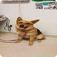 Adopt A Pet :: *RINGO - Bakersfield, CA