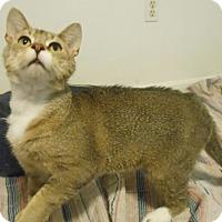 Adopt A Pet :: Snyder - Reston, VA