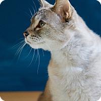 Adopt A Pet :: Kiki - Seattle, WA