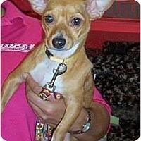 Adopt A Pet :: Freddie - Orlando, FL