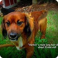 Adopt A Pet :: Harbin - Gadsden, AL