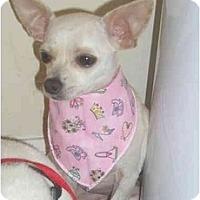Adopt A Pet :: Edna - Pembroke Pines, FL