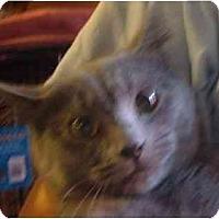 Adopt A Pet :: Serena - Bedford, MA