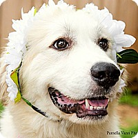 Adopt A Pet :: Audree - Gadsden, AL