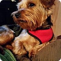Adopt A Pet :: Spencer - Hazard, KY