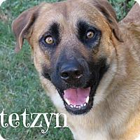 Adopt A Pet :: Stetzyn - Scottsdale, AZ