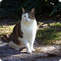 Adopt A Pet :: Hopkins - Naples, FL