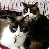 Adopt A Pet :: Kahlua & Kona - Palmdale, CA