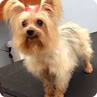 Adopt A Pet :: Sissy - Kansas city, MO