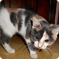 Adopt A Pet :: Lucinda - Chattanooga, TN