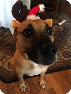 Shepherd (Unknown Type)/Labrador Retriever Mix Dog for adoption in Santa Clarita, California - Edie