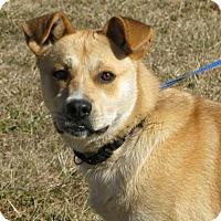 Adopt A Pet :: Bruno - Mineral, VA