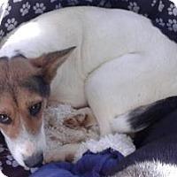 Adopt A Pet :: Rainbow - Tucson, AZ