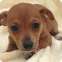 Adopt A Pet :: Hasbro - Trenton, NJ