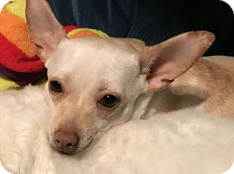 Adopt A Pet :: Mindy  - Renton, WA