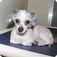 Adopt A Pet :: 24459 - Carly - Ellicott City, MD