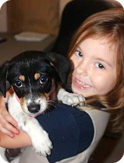 Terrier (Unknown Type, Medium) Mix Puppy for adoption in Miami, Florida - Maggie